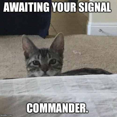 AWAITING YOUR SIGNAL COMMANDER. | made w/ Imgflip meme maker