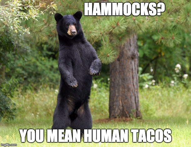 I present a new meme template...Overly manly bear! | HAMMOCKS? YOU MEAN HUMAN TACOS | image tagged in overly manly bear,memes,funny,funny memes | made w/ Imgflip meme maker