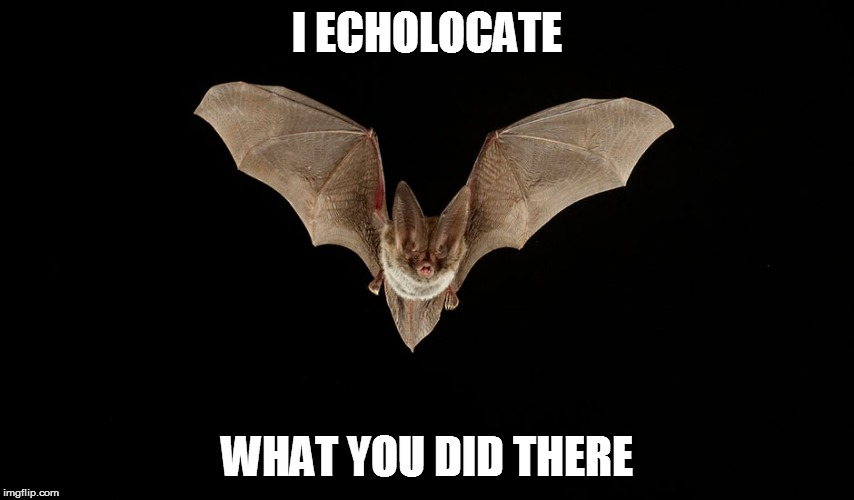 I ECHOLOCATE WHAT YOU DID THERE | made w/ Imgflip meme maker