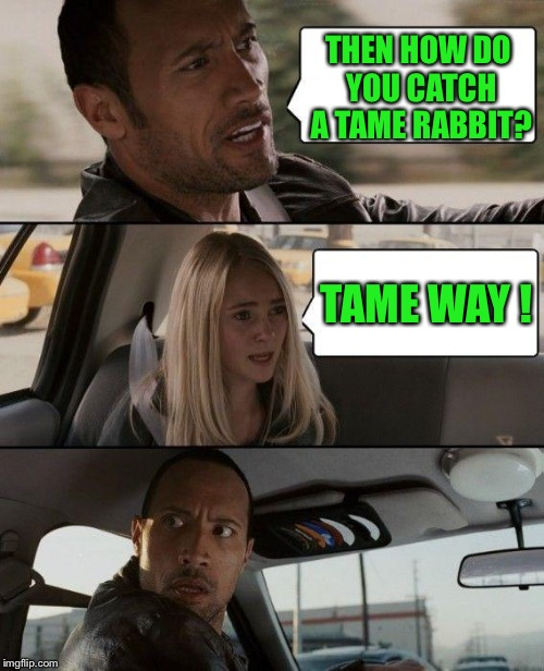 The Rock Driving Meme | THEN HOW DO YOU CATCH A TAME RABBIT? TAME WAY ! | image tagged in memes,the rock driving | made w/ Imgflip meme maker