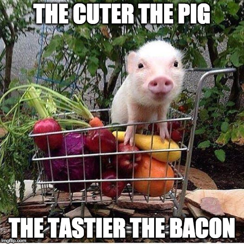 Bacon > Cute | THE CUTER THE PIG THE TASTIER THE BACON | image tagged in baby pig please do not eat bacon,bacon,cute,tasty,bacon fun | made w/ Imgflip meme maker