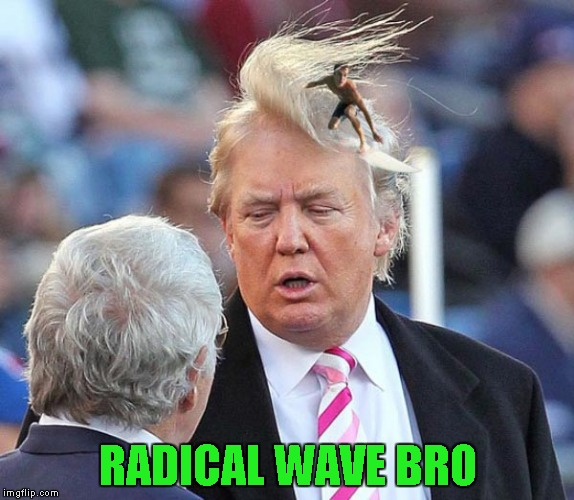 Riding the Presidential wave! | RADICAL WAVE BRO | image tagged in trump hair surfer,memes,trump,funny,bad rugs,radical wave | made w/ Imgflip meme maker