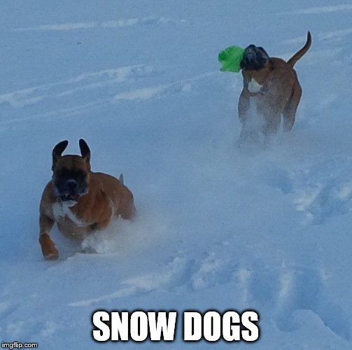SNOW DOGS | made w/ Imgflip meme maker