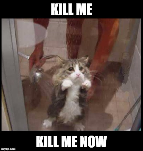 ROFL  poor cat! | KILL ME KILL ME NOW | image tagged in memes,funny,cat,shower,wet cat,pets | made w/ Imgflip meme maker