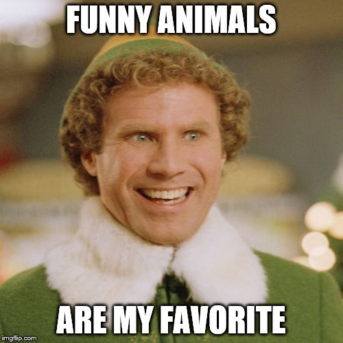 FUNNY ANIMALS ARE MY FAVORITE | made w/ Imgflip meme maker