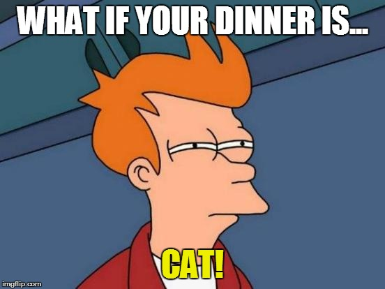 Futurama Fry Meme | WHAT IF YOUR DINNER IS... CAT! | image tagged in memes,futurama fry | made w/ Imgflip meme maker