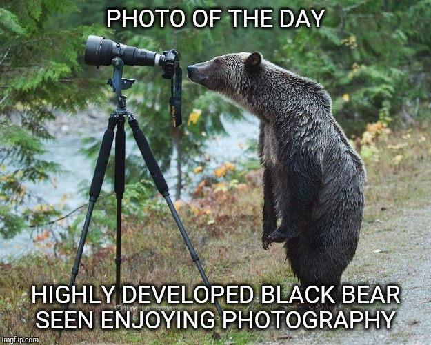 Canadian Photographer Bear | PHOTO OF THE DAY HIGHLY DEVELOPED BLACK BEAR SEEN ENJOYING PHOTOGRAPHY | image tagged in photo of the day,photography,bear,canada | made w/ Imgflip meme maker