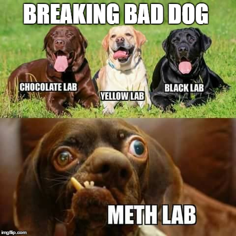 tweaking out on memes i have seen  |  BREAKING BAD DOG | image tagged in kinda done dog,raydog for president,dog memes,methed up | made w/ Imgflip meme maker