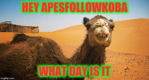 HEY APESFOLLOWKOBA WHAT DAY IS IT | made w/ Imgflip meme maker