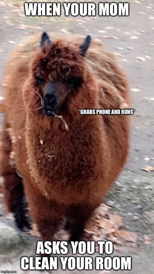 Alpaca Images Imgflip