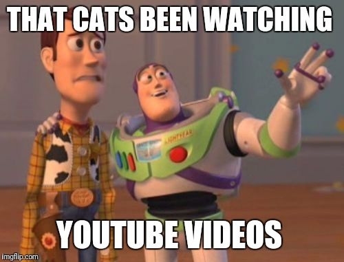 X, X Everywhere Meme | THAT CATS BEEN WATCHING YOUTUBE VIDEOS | image tagged in memes,x,x everywhere,x x everywhere | made w/ Imgflip meme maker