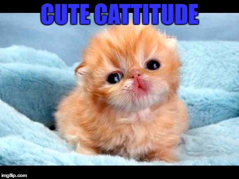 Aawww | CUTE CATTITUDE | image tagged in cat,kiss,love,cute | made w/ Imgflip meme maker