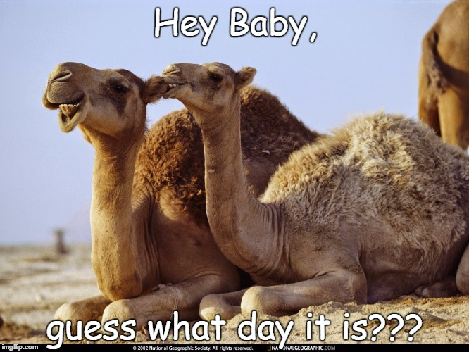 Hey Baby | Hey Baby, guess what day it is??? | image tagged in hump day camel | made w/ Imgflip meme maker