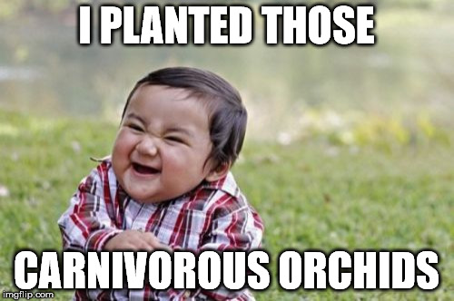 Evil Toddler Meme | I PLANTED THOSE CARNIVOROUS ORCHIDS | image tagged in memes,evil toddler | made w/ Imgflip meme maker