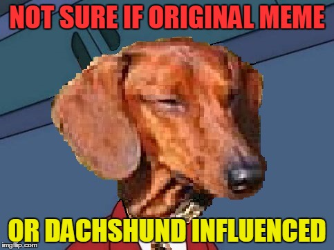 All about Dachshund? (Dachshund week - 2nd to 9th February // a Juicydeath1025 event) | NOT SURE IF ORIGINAL MEME OR DACHSHUND INFLUENCED | image tagged in not sure dachshund-fry,memes,funny,dachshund week | made w/ Imgflip meme maker