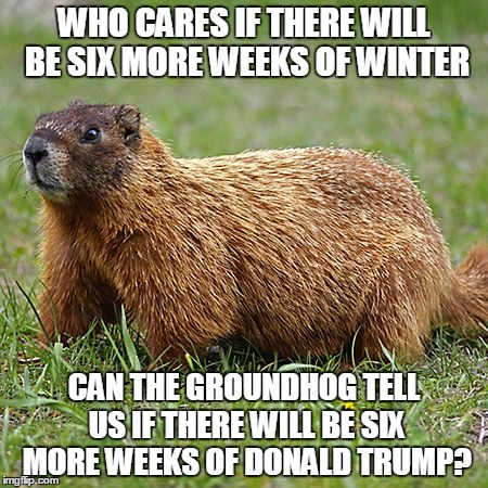groundhog | WHO CARES IF THERE WILL BE SIX MORE WEEKS OF WINTER CAN THE GROUNDHOG TELL US IF THERE WILL BE SIX MORE WEEKS OF DONALD TRUMP? | image tagged in groundhog | made w/ Imgflip meme maker