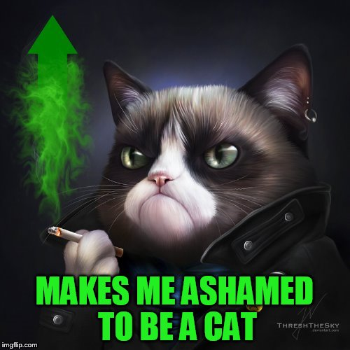 MAKES ME ASHAMED TO BE A CAT | made w/ Imgflip meme maker