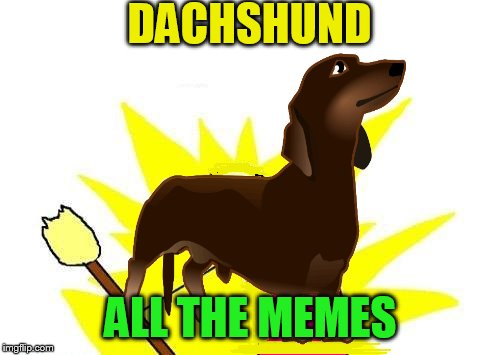 DACHSHUND ALL THE MEMES | made w/ Imgflip meme maker