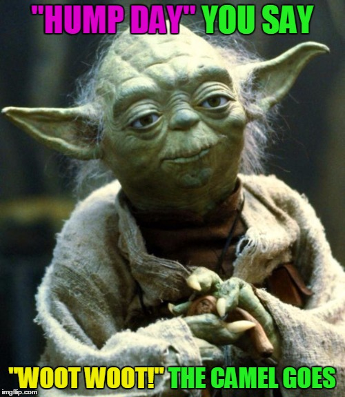 "Star Wars Yoda Meme | ""HUMP DAY"" YOU SAY ""WOOT WOOT!"" THE CAMEL GOES ""HUMP DAY"" ""WOOT WOOT!"" 