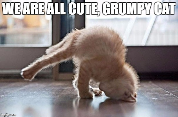 WE ARE ALL CUTE, GRUMPY CAT | made w/ Imgflip meme maker