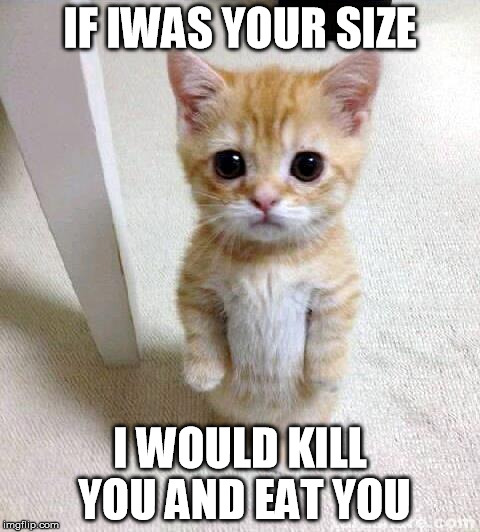 Cute Cat | IF IWAS YOUR SIZE I WOULD KILL YOU AND EAT YOU | image tagged in memes,cute cat | made w/ Imgflip meme maker