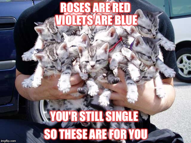 All the single ladies cat up | ROSES ARE RED VIOLETS ARE BLUE SO THESE ARE FOR YOU YOU'R STILL SINGLE | image tagged in crazy cat lady,valentine forever alone,roses are red,single,valentine's day,single ladies | made w/ Imgflip meme maker