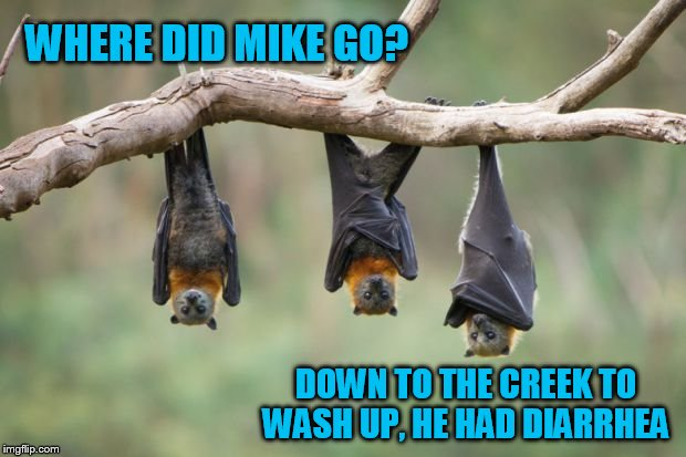One thing that sucks about sleeping upside down! | WHERE DID MIKE GO? DOWN TO THE CREEK TO WASH UP, HE HAD DIARRHEA | image tagged in bats,potty humor | made w/ Imgflip meme maker
