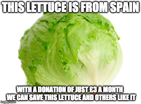 Lettuce  | THIS LETTUCE IS FROM SPAIN WITH A DONATION OF JUST £3 A MONTH  WE CAN SAVE THIS LETTUCE AND OTHERS LIKE IT | image tagged in lettuce | made w/ Imgflip meme maker