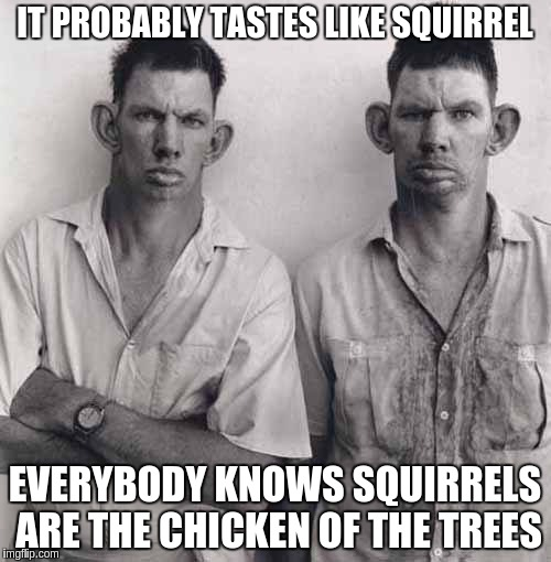 What are you talking about | IT PROBABLY TASTES LIKE SQUIRREL EVERYBODY KNOWS SQUIRRELS ARE THE CHICKEN OF THE TREES | image tagged in what are you talking about | made w/ Imgflip meme maker