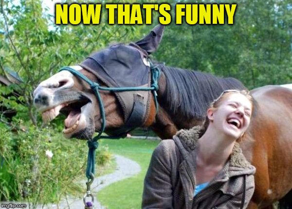 Laughing Horse | NOW THAT'S FUNNY | image tagged in laughing horse | made w/ Imgflip meme maker