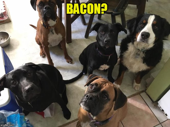 BACON? | made w/ Imgflip meme maker