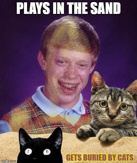 Bad Turd Brian | PLAYS IN THE SAND GETS BURIED BY CATS | image tagged in memes,bad luck brian,cats,bury their poop,in case you're a dog person,and don't know these things | made w/ Imgflip meme maker