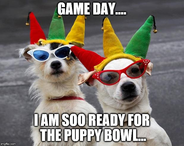 dogs mardi gras | GAME DAY.... I AM SOO READY FOR THE PUPPY BOWL... | image tagged in dogs mardi gras | made w/ Imgflip meme maker