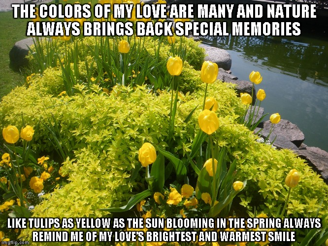 The Colors of My Love | THE COLORS OF MY LOVE ARE MANY AND NATURE ALWAYS BRINGS BACK SPECIAL MEMORIES LIKE TULIPS AS YELLOW AS THE SUN BLOOMING IN THE SPRING ALWAYS | image tagged in memories,colors,love,tulips,the sun,smiles | made w/ Imgflip meme maker