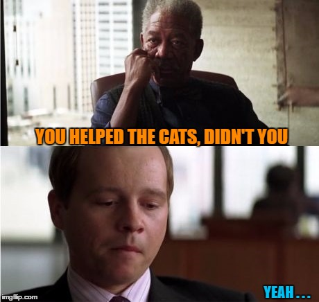 YOU HELPED THE CATS, DIDN'T YOU YEAH . . . | made w/ Imgflip meme maker