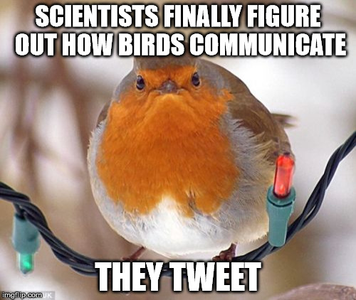 Bah Humbug | SCIENTISTS FINALLY FIGURE OUT HOW BIRDS COMMUNICATE THEY TWEET | image tagged in memes,bah humbug | made w/ Imgflip meme maker