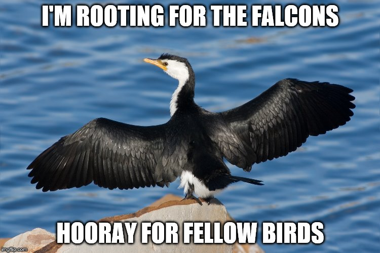 Duckguin | I'M ROOTING FOR THE FALCONS HOORAY FOR FELLOW BIRDS | image tagged in duckguin | made w/ Imgflip meme maker