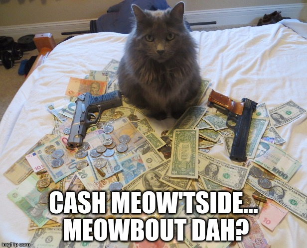 CASH MEOW'TSIDE... MEOWBOUT DAH? | image tagged in cats,cash me ousside how bow dah | made w/ Imgflip meme maker
