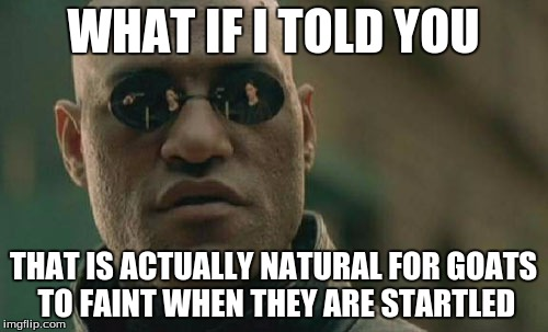Matrix Morpheus Meme | WHAT IF I TOLD YOU THAT IS ACTUALLY NATURAL FOR GOATS TO FAINT WHEN THEY ARE STARTLED | image tagged in memes,matrix morpheus | made w/ Imgflip meme maker