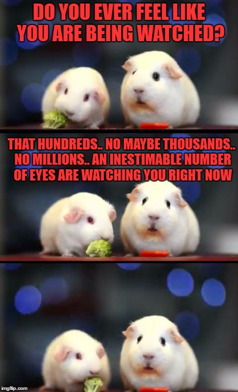 scared guinea pigs is the name of this template.. hope you like it | DO YOU EVER FEEL LIKE YOU ARE BEING WATCHED? THAT HUNDREDS.. NO MAYBE THOUSANDS.. NO MILLIONS.. AN INESTIMABLE NUMBER OF EYES ARE WATCHING Y | image tagged in scared guinea pigs | made w/ Imgflip meme maker