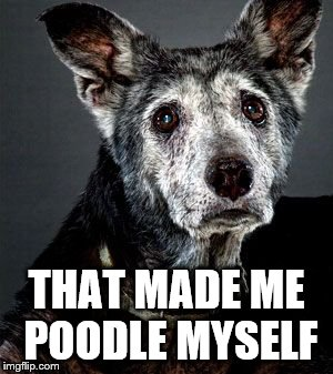 THAT MADE ME POODLE MYSELF | made w/ Imgflip meme maker