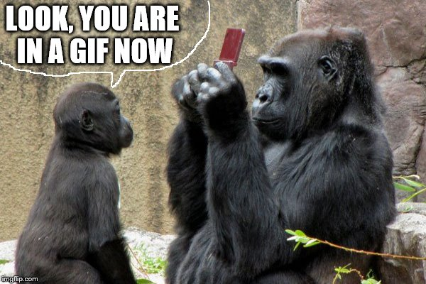LOOK, YOU ARE IN A GIF NOW | made w/ Imgflip meme maker