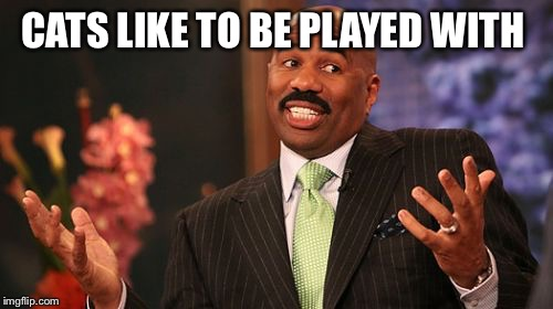 Steve Harvey Meme | CATS LIKE TO BE PLAYED WITH | image tagged in memes,steve harvey | made w/ Imgflip meme maker