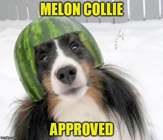 MELON COLLIE APPROVED | made w/ Imgflip meme maker