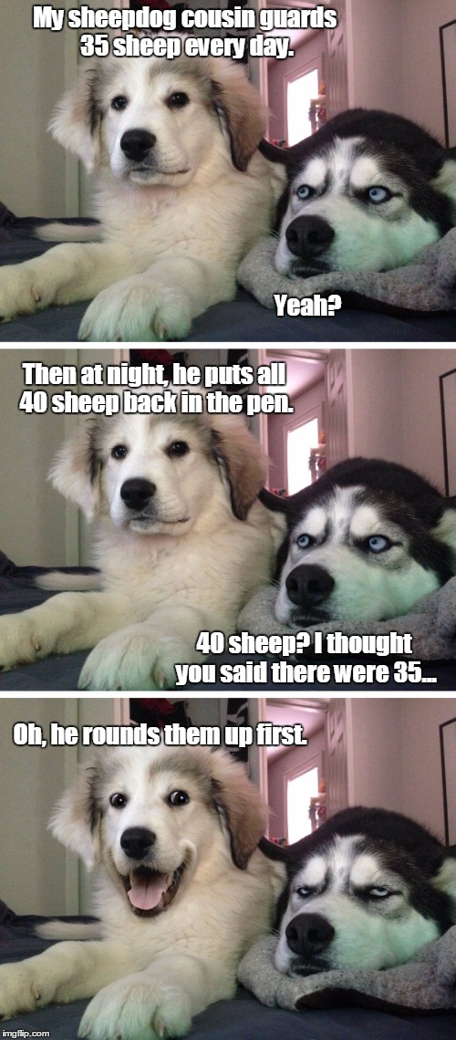 Warning: Sheep Joke Ahead | My sheepdog cousin guards 35 sheep every day. Yeah? Then at night, he puts all 40 sheep back in the pen. 40 sheep? I thought you said there  | image tagged in bad pun dogs,math,sheep | made w/ Imgflip meme maker