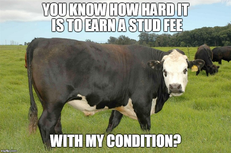 YOU KNOW HOW HARD IT IS TO EARN A STUD FEE WITH MY CONDITION? | made w/ Imgflip meme maker