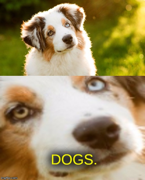 DOGS. | made w/ Imgflip meme maker