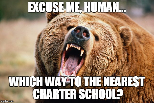 grizzly bear | EXCUSE ME, HUMAN... WHICH WAY TO THE NEAREST CHARTER SCHOOL? | image tagged in grizzly bear | made w/ Imgflip meme maker