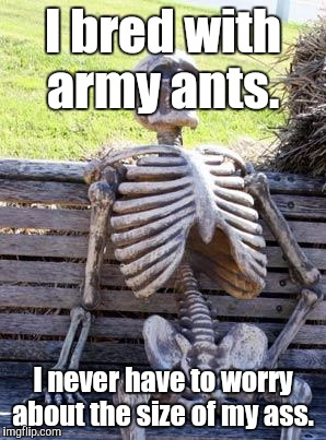 Waiting Skeleton Meme | I bred with army ants. I never have to worry about the size of my ass. | image tagged in memes,waiting skeleton | made w/ Imgflip meme maker