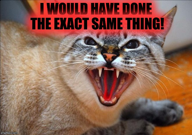 Pissed off cat | I WOULD HAVE DONE THE EXACT SAME THING! | image tagged in pissed off cat | made w/ Imgflip meme maker
